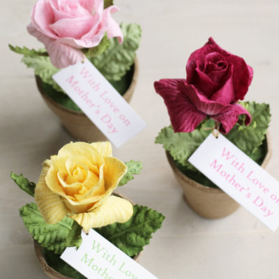 Mothers Day Rose Pot Gift