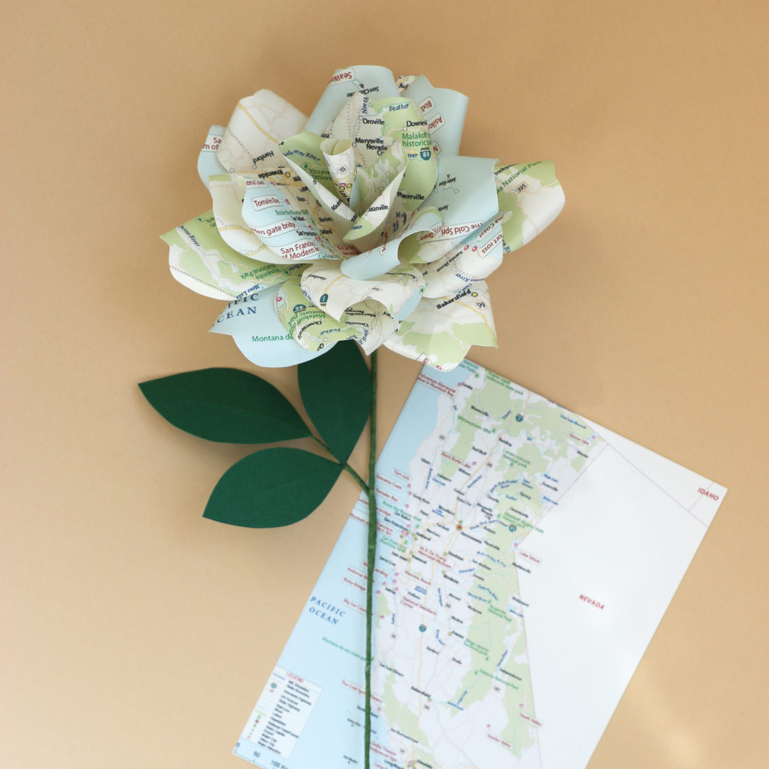 Map Paper Rose