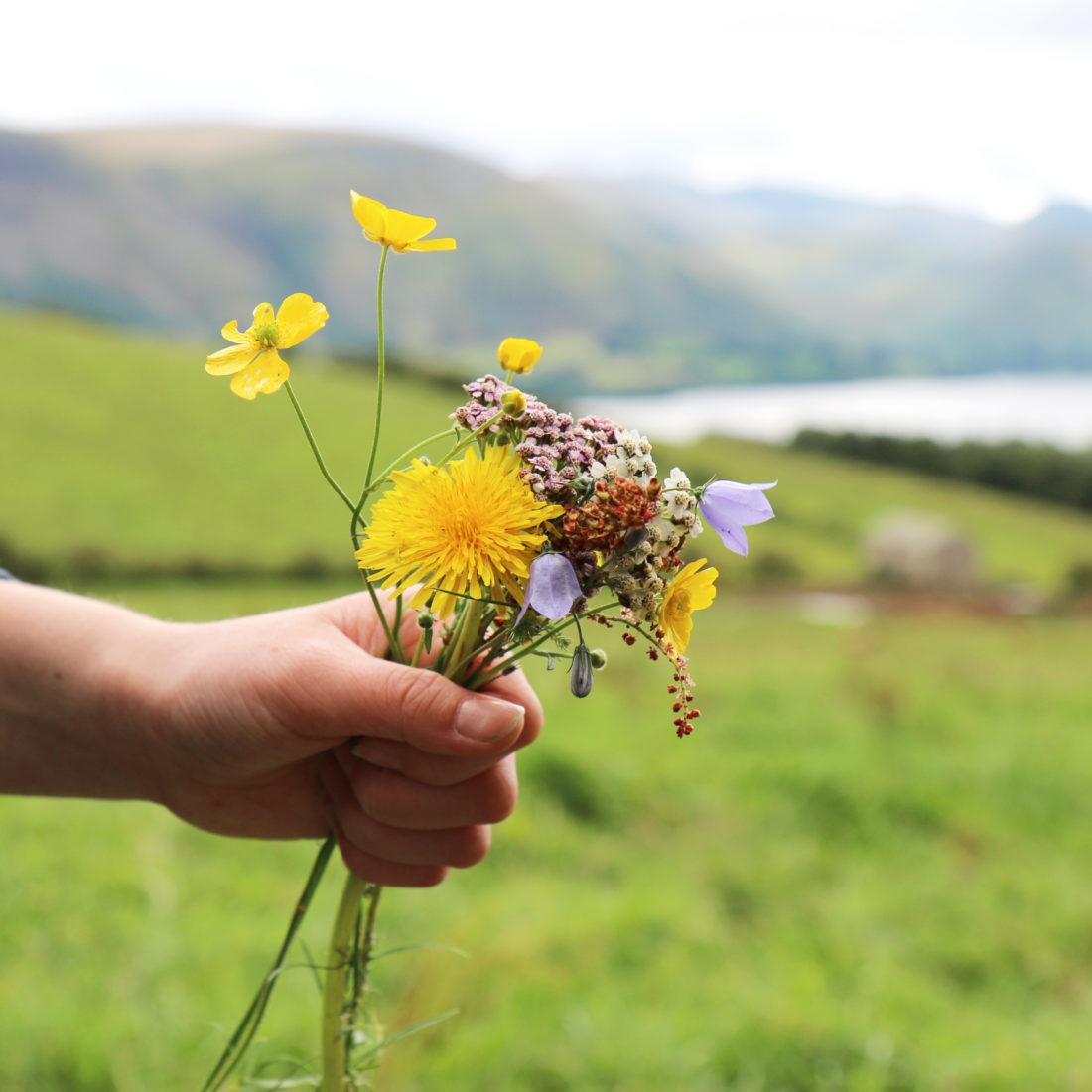 Wildflowers Lake District