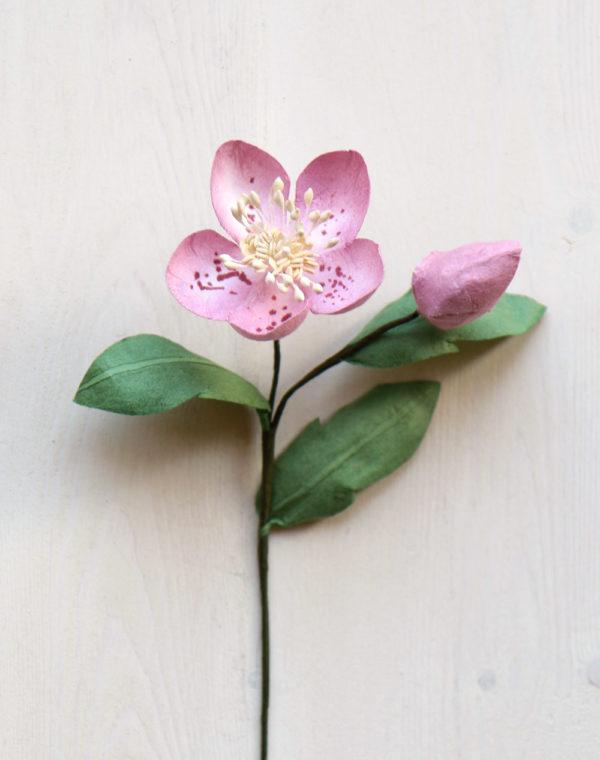 Paper Hellebore Pink