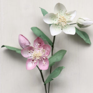 Christmas Roses Pink & White