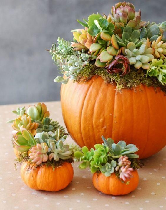 Halloween Pretty Pumpkins