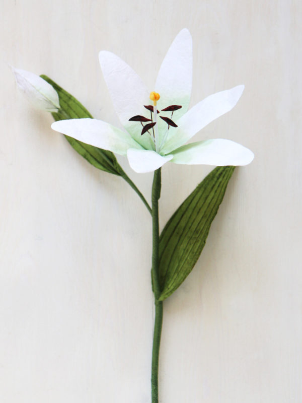 White Paper Lily