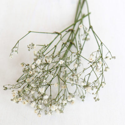 Dried Gypsophila