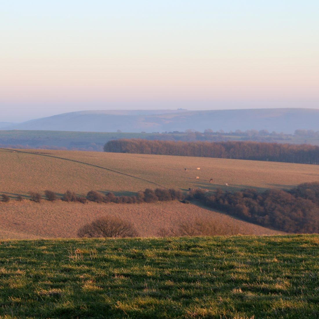 Spring on the South Downs