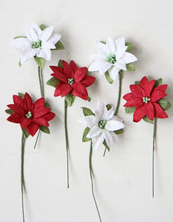 Mini Poinsettia