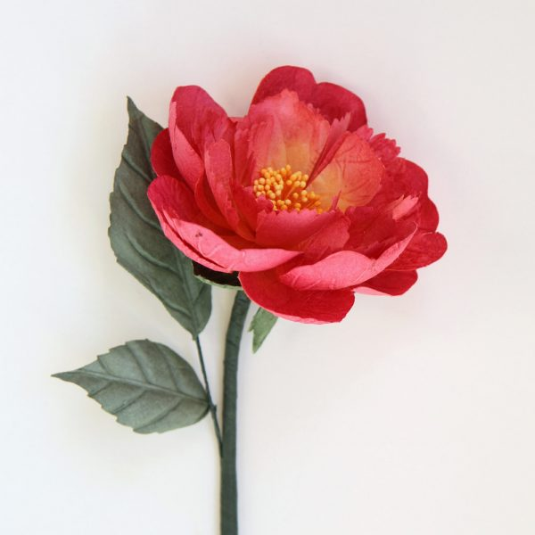 Coral Pink Paper Peony